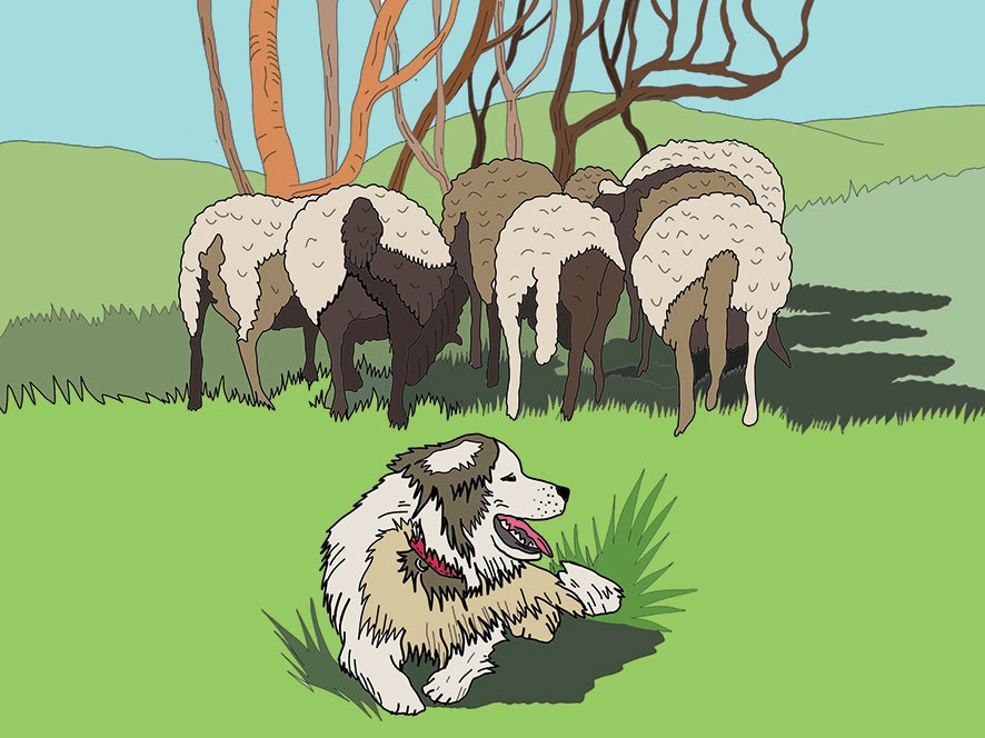Illustration for Sheperd Dogs campaign
